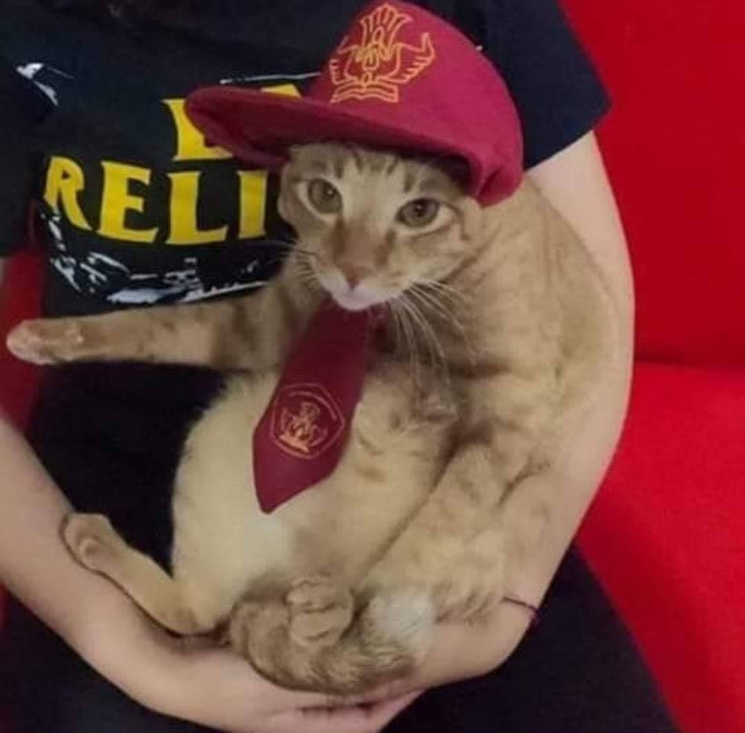 Unduh 61+  Gambar Kucing Nonton Tv Lucu Gratis