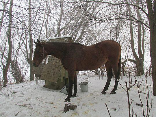 Wita na jeden z koni.
