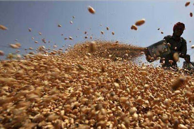 Food Ministry Fixed Reserve Price Of Wheat