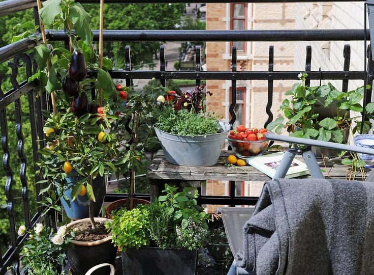 pequeño balcón con plantas comestibles- Horticultura urbana