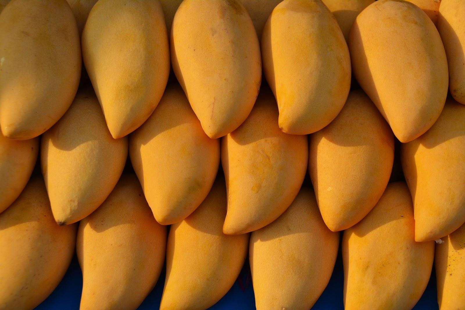 Very Fresh Mango fruit for summer