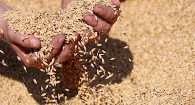 Агросектор может дать более половины валютной выручки страны в 2021 г