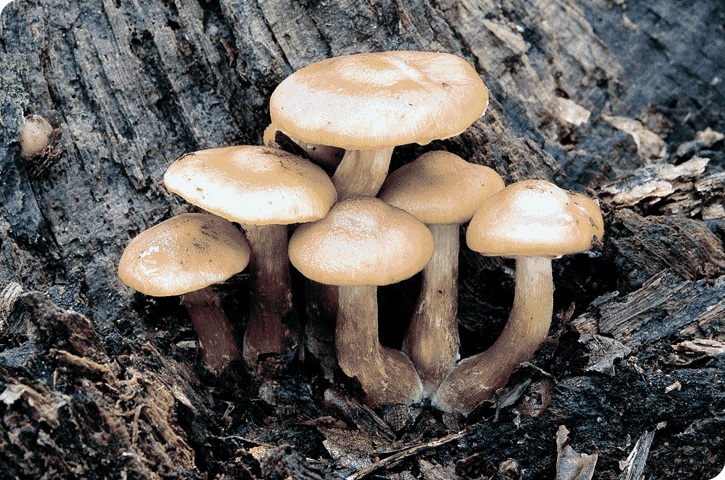 Do Fungi Store Food As Glycogen