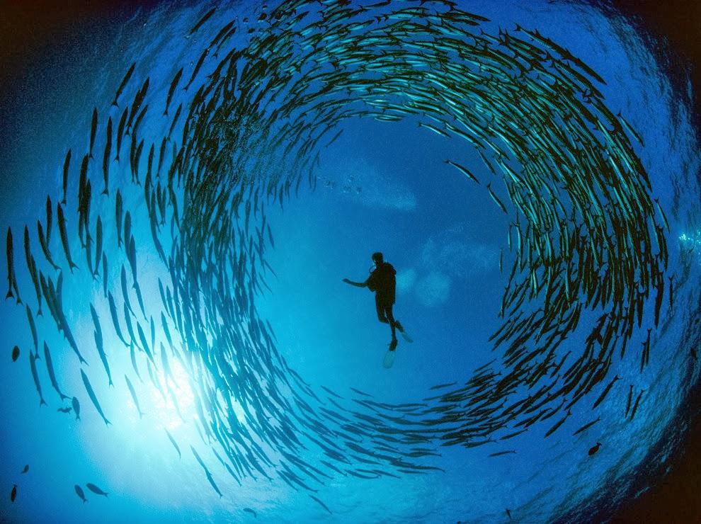 Un mundo en paz explorando el fondo del mar - Fotos fondo del mar ...