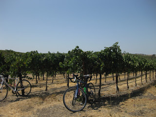 Bikes parked with grapevines, Pomar Junction Vineyard and Winery, Templeton, California