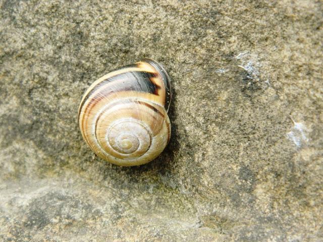 Snails, Snail Shell, Mollusc,