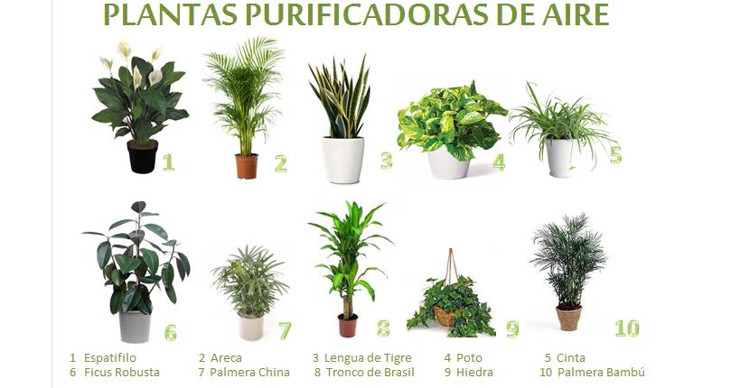Plantas purificadoras de aire ~ El Jardin de Camila