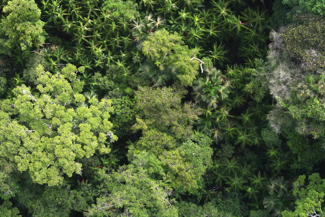 Ancient peoples shaped the Amazon rainforest