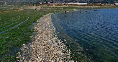 نفوق ما لا يقل عن 40 طن من الأسماك على ضفاف بحيرة لبنانية