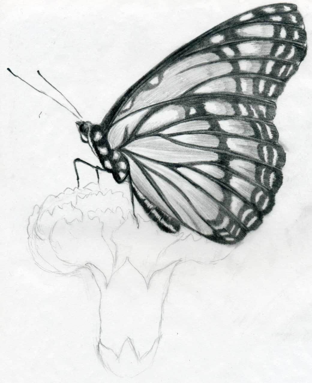 ymu2u: Pencil Drawing