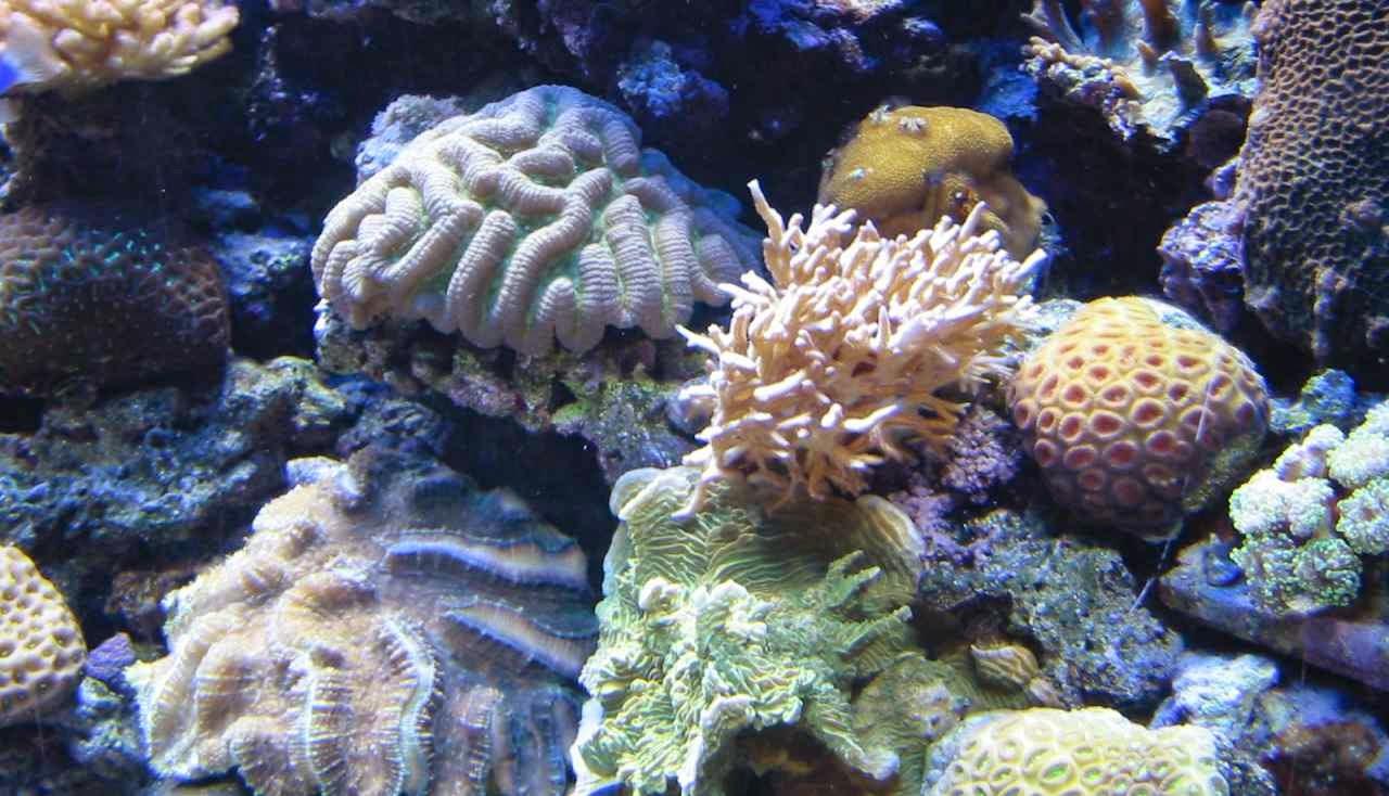 Los corales, rocas sedimentarias