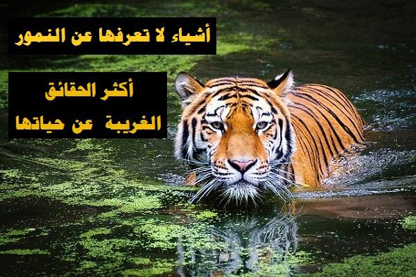 أشياء لا تعرفها عن النمور