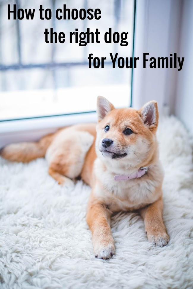 How to choose the right dog for your family? | Tips and Guidelines