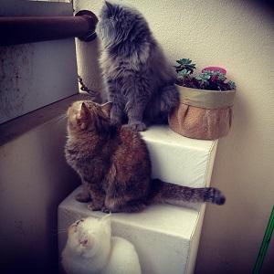 gatos na sacada