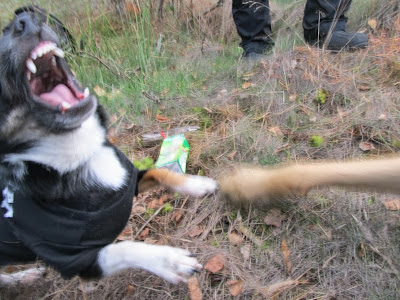 hund skäller vid ljud