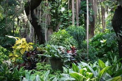 Hutan, Jenis Hutan, Hutan Hujan Tropis