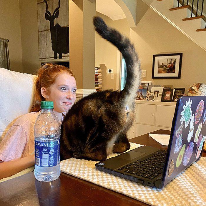 tingkah usil kucing (reddit.com/devofatherofchar)