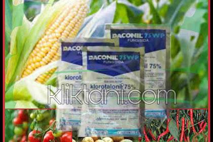 Deskripsi dan Dosis Fungisida Daconil 75WP Yang Tepat