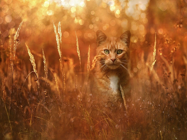 140+ Cute Cat Images | Cat Wallpaper free download HD