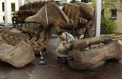 Argentinosaurus yaitu dinosaurus herbivora yang merupakan binatang terberat dan terbesar ya 7 Fakta Argentinosaurus Untuk Tambah Pengetahuan