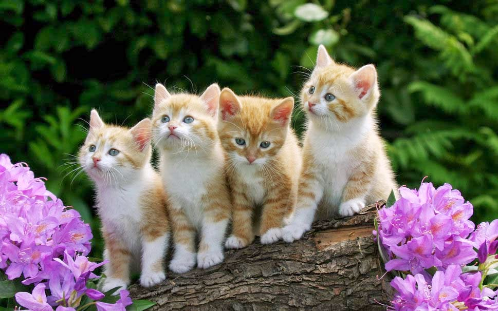 empat-bayi-kucing-anak kucing