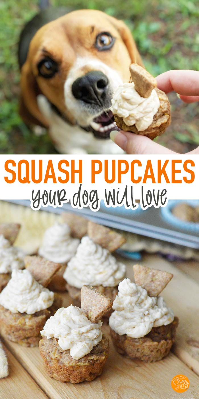 Spoil your dog with homemade pupcakes! These squash cupcakes are the perfect dog birthday cupcake. Adorable dog cupcakes with peanut butter frosting that your dog will love. #dogtreats #dogs #pupcakes #homemade