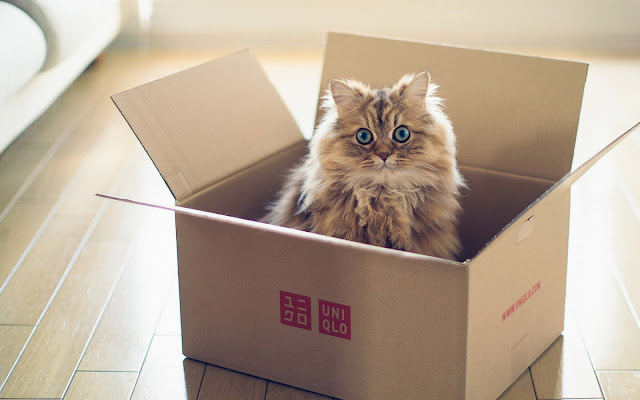 Jong katje in een doos