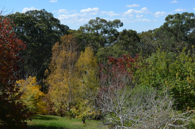 A mix of deciduous trees on a lawn in the foreground with taller native trees in the background.