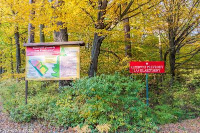 Rezerwat Las Klasztorny Leżajsk
