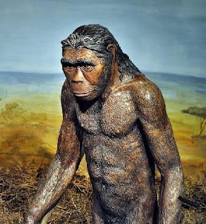 Homo habilis (умел човек) (от преди около 2,5 млн. до преди около 1,5 млн. )