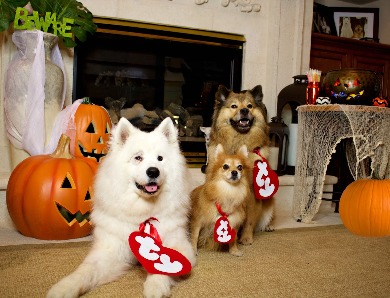 Kati Heifner: HOW TO: TY Beanie Baby Dog Costume