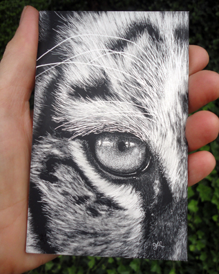Scratchboard to show size