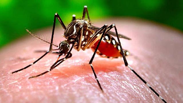 Bilim İnsanları, Sivrisinekten COVID-19 Bulaşmayacağını Kanıtladı