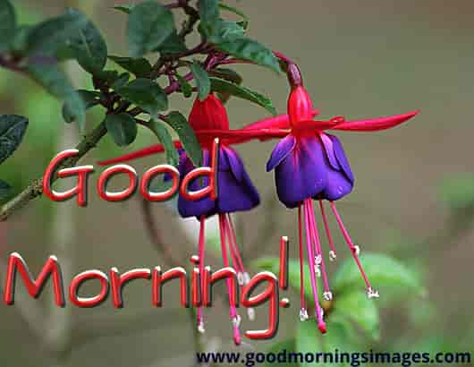 Gud Morning Images With Flower