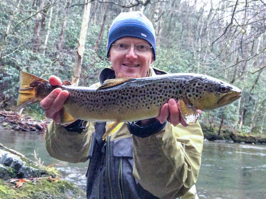 Big female brown trout in the Smokies