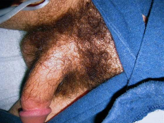 Hairy Balls And Penis