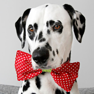 Dalmatian dog wearing red polka dot bow tie