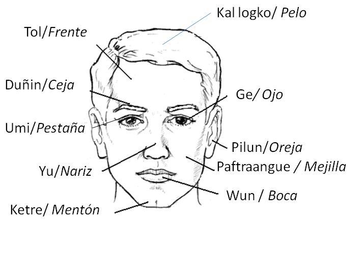 Dibujos De Aplicacio De Partes De La Cara: Aprendiendo Mapudungun