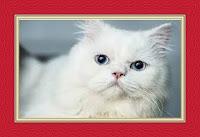 Black Cat White Cat Dream Meaning and Interpretations – DREAMLAND