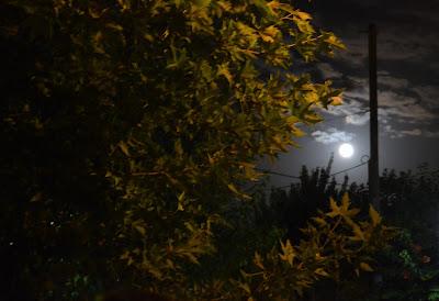 Νυχτερινή πεζοπορία στις 18/08/2016 Ε.Ο.Σ.Φ.ΑΡ.Ο.