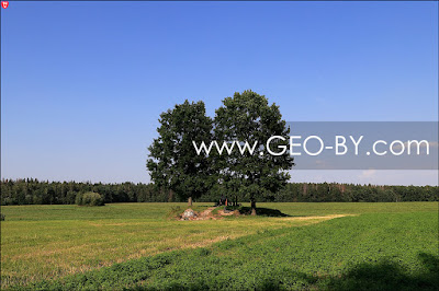 Родовое кладбище Войниловичей в деревне Савичи. Курган