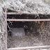 Κομπωτή Ξηρομέρου: Παγίδα για αγριόχοιρους κατάσχεσαν θηροφύλακες της Δ' ΚΟΣΕ