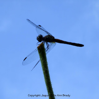 Dance of the Dragonfly step 6