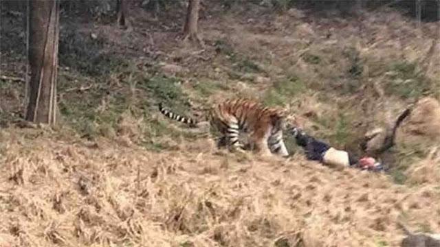 Tigre mata a hombre en zoológico de China