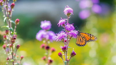 Wallpaper Spring Butterfly magical nature