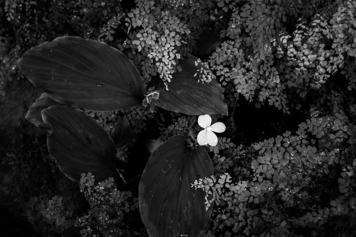 b&w foliage