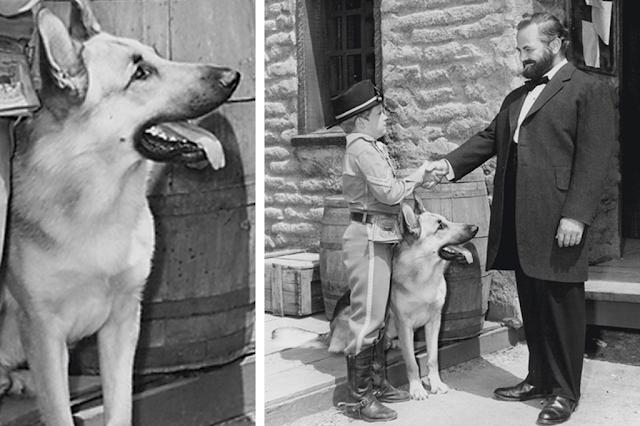 Listas│6 Cachorros que fizeram história