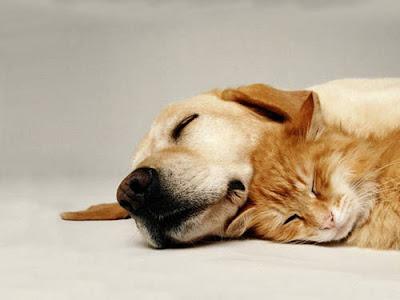 Conviviendo perros y gatos