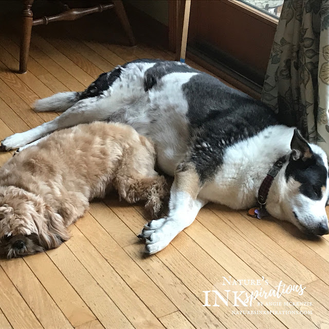 Best buddies and brothers - Benji and Spot | Nature's INKspirations by Angie McKenzie