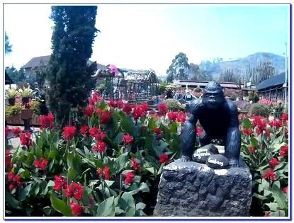 Kebun Bunga Begonia